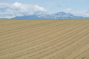 上富良野町の畑と大雪山旭岳の写真素材 [FYI00024920]