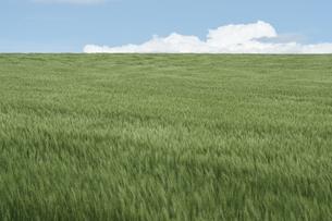 上富良野町の草原と雲の写真素材 [FYI00024922]
