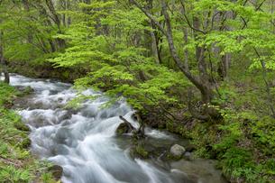 新緑の木流川の写真素材 [FYI00025073]
