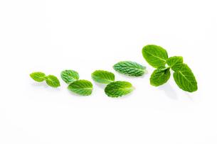 スペアミントの葉の写真素材 [FYI00025111]