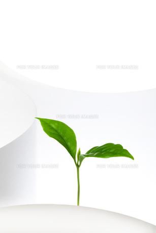 コーヒーの新芽の素材 [FYI00025190]