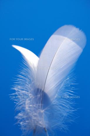 青空と白い羽の素材 [FYI00025213]