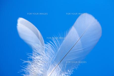 青空と白い羽の素材 [FYI00025235]