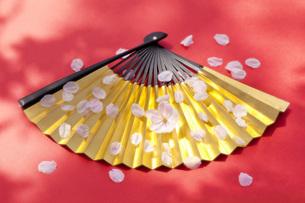 金扇子に舞う桜の花びらの素材 [FYI00025492]