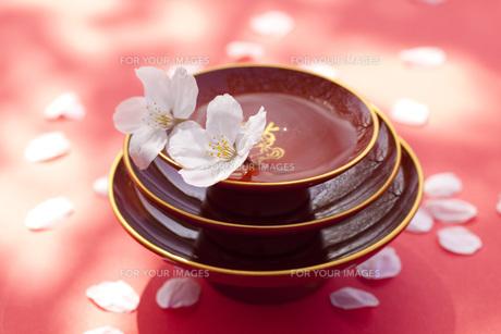 祝い酒と桜の花びらの素材 [FYI00025493]