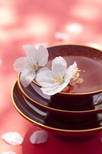 杯に舞う桜の花びらの素材 [FYI00025497]