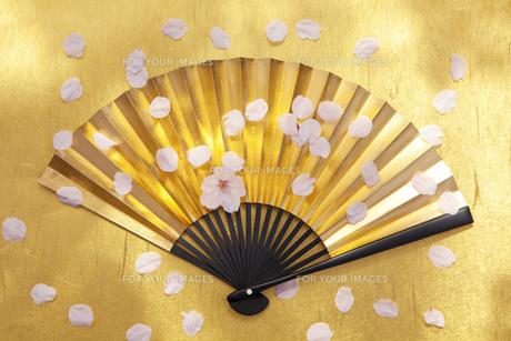 金扇子に舞う桜の花びらの素材 [FYI00025500]