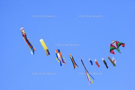 鯉のぼりの連凧の写真素材 [FYI00025537]