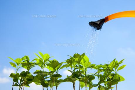 新芽への水やりの素材 [FYI00025564]