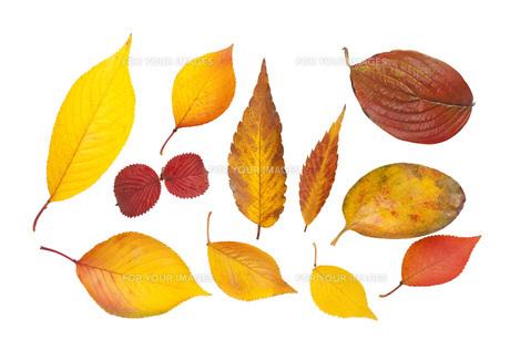 様々な落ち葉の素材 [FYI00025641]
