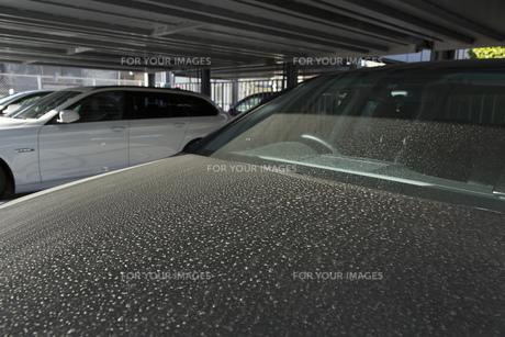 黄砂で汚れた車の写真素材 [FYI00026130]
