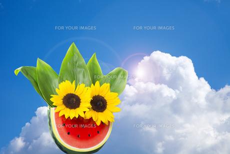 向日葵とスイカの夏イメージの写真素材 [FYI00026166]