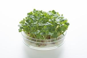 野菜の品種改良イメージの素材 [FYI00026461]