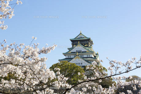 大阪城と桜の素材 [FYI00026484]