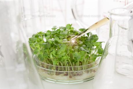 野菜の品種改良イメージの素材 [FYI00026488]
