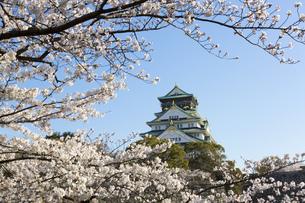 大阪城と桜の素材 [FYI00026503]