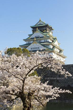 大阪城と桜の素材 [FYI00026509]