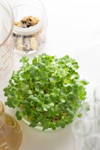 野菜の品種改良イメージの素材 [FYI00026536]