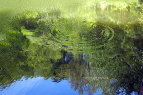 新緑が映る奈良の新池の素材 [FYI00026560]