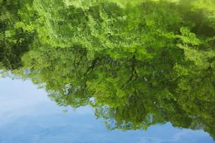 新緑が映る奈良の新池の素材 [FYI00026586]