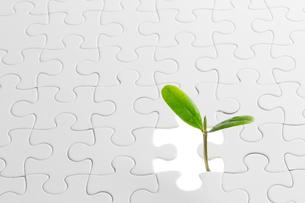 新芽とパズルの素材 [FYI00026605]