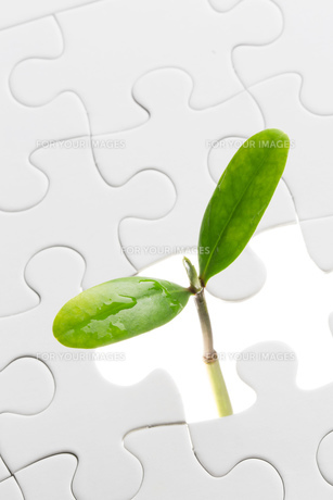 新芽とパズルピースの写真素材 [FYI00026628]