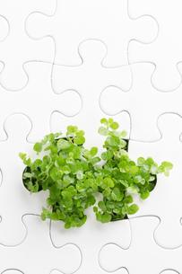発芽の環境イメージの写真素材 [FYI00026667]