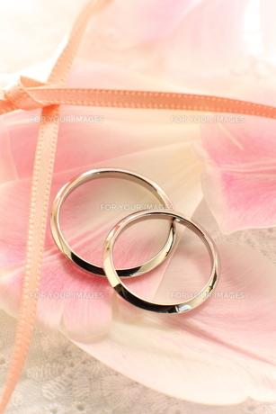 結婚指輪の写真素材 [FYI00026918]