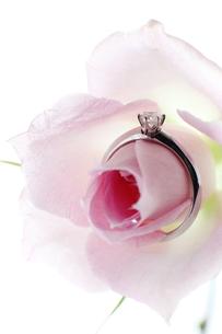薔薇と婚約指輪の素材 [FYI00027011]