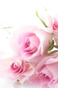 薔薇の花束の素材 [FYI00027012]
