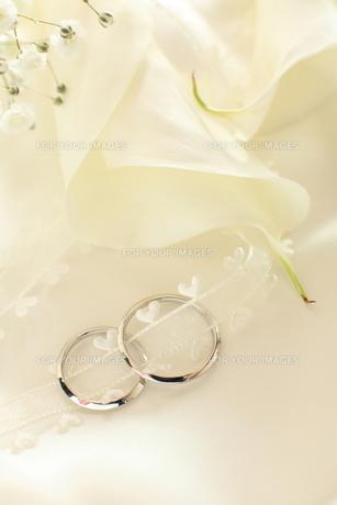 初夏のカラーと結婚指輪の写真素材 [FYI00028192]