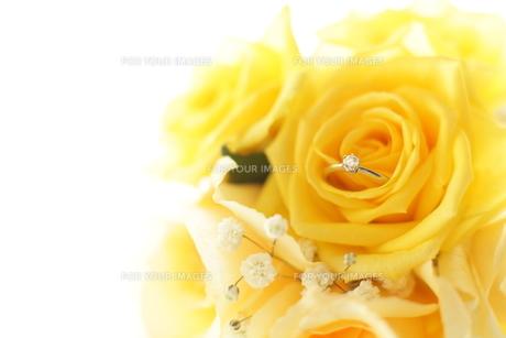 婚約指輪の写真素材 [FYI00028566]