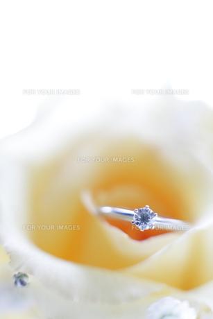 婚約指輪の写真素材 [FYI00028567]