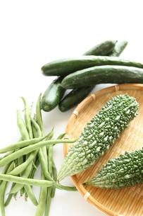 夏野菜のゴーヤの素材 [FYI00029350]