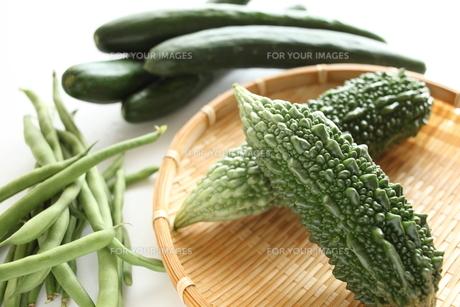 夏野菜のゴーヤの素材 [FYI00029364]