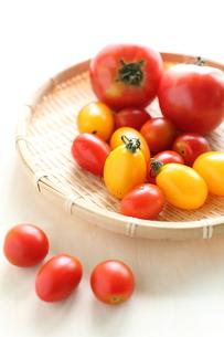 自家栽培の不揃いトマトの写真素材 [FYI00029546]