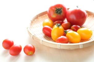 自家栽培のトマト集合の写真素材 [FYI00029547]