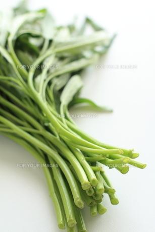 アジア食材のクウシンサイ空芯菜の写真素材 [FYI00029701]