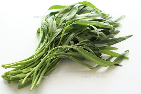 アジア食材のクウシンサイ空芯菜の写真素材 [FYI00029709]