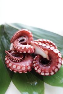 刺身用の蛸足の写真素材 [FYI00029818]
