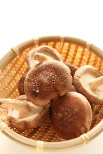 秋の味覚の椎茸の写真素材 [FYI00030197]
