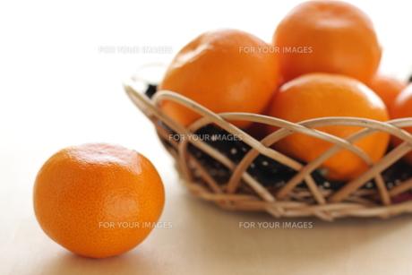 国産の蜜柑の素材 [FYI00030899]