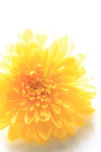 食花の写真素材 [FYI00031208]