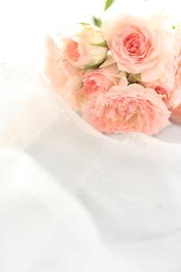 薔薇の素材 [FYI00032539]