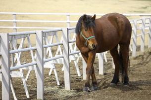 馬の素材 [FYI00033170]