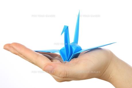 折鶴を持つの写真素材 [FYI00033355]