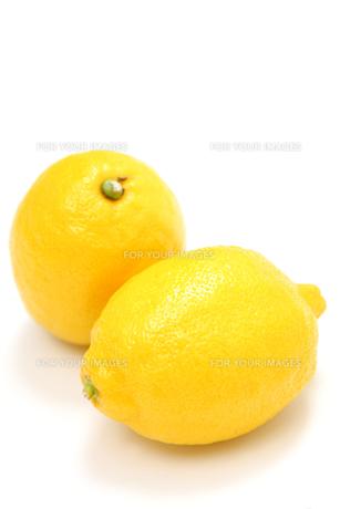 レモンの写真素材 [FYI00033536]