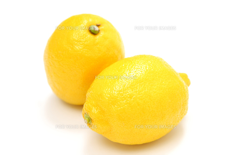 レモンの写真素材 [FYI00033558]