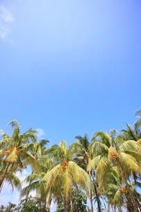 椰子の木の写真素材 [FYI00034613]