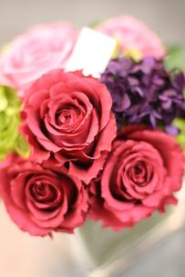 薔薇の写真素材 [FYI00034683]